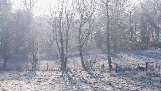 Blantyre Park Farm Woodlands_5